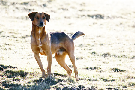 half breed: A front view of a half breed dog standing on the meadow.