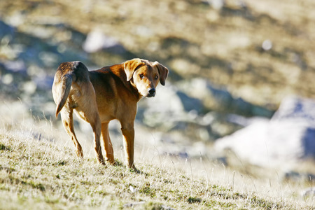half breed: A half breed dog standing in the field and looking at the camera.