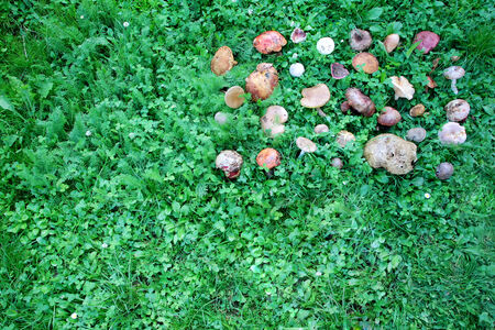 inedible: A birds eye view of a large group of picked edible and inedible wild forest mushrooms arranged on green grass. Stock Photo