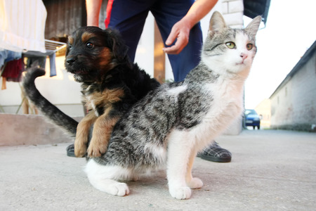 half breed: A puppy and a kitten playing outside while the owner is standing behind them.