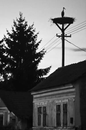 Una cicogna in piedi nel nido in cima a un palo della luce sopra le case al tramonto. Archivio Fotografico