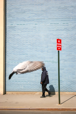 march 17th: NEW YORK CITY, USA - MARCH 17 : A side view of a man walking in the street next to a street sign and a bird flying on March 17th, 2005 in New York City, USA. Editorial