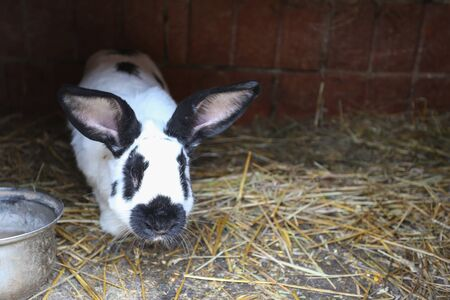 rabbit in cage: A rabbit in the cage standing on the hay. Stock Photo