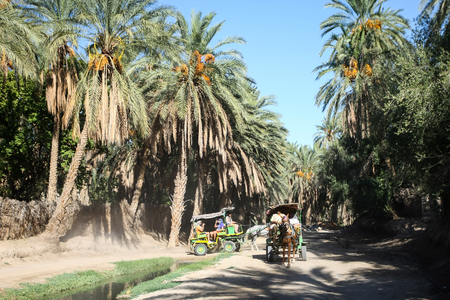 thru: TUNIS, TUNISIA - SEPTEMBER 16, 2012 : Carriages with tourists passing thru the oasis in Tozeur, Tunisia. Editorial
