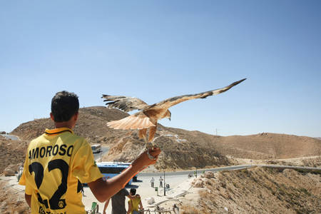 matmata: MATMATA, TUNISIA - SEPTEMBER 17, 2012 : A rear view of a Tunisian man holding a hawk for photographing with tourists at a tourist stop in Matmata with a view of rocky desert in Matmata, Tunisia.