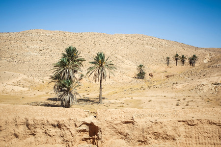 matmata: The rocky desert of Matmata with palm trees in south Tunisia. Matmata is famous for its troglodyte cave dwellings.