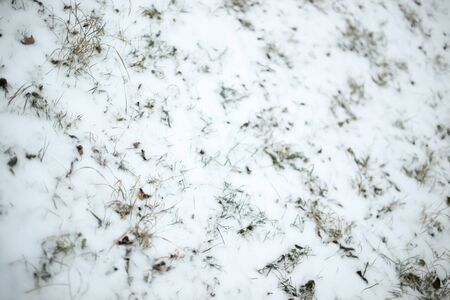 A view of grass covered with snow. Stock Photo