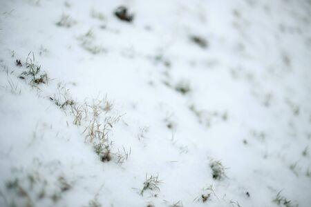 A view of dry grass covered with snow.