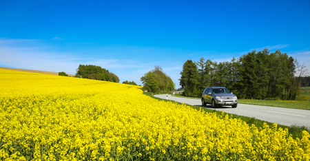 NANDLSTADT, GERMANY - MAY 6, 2017 : A view of yellow flowering rapeseed fields in spring with a car driving down the country road in Nandlstadt, Germany. Rapeseed is grown for the production of animal feeds, vegetable oils and biodiesel. Editorial
