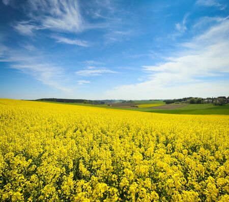 A view of yellow flowering rapeseed fields in spring in Bavaria, Germany. Rapeseed is grown for the production of animal feeds, vegetable oils and biodiesel.