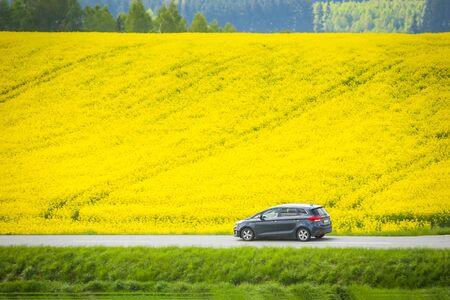 A car on the road passing next to yellow flowering rapeseed fields in spring in Bavaria, Germany. Rapeseed is grown for the production of animal feeds, vegetable oils and biodiesel. Stock Photo