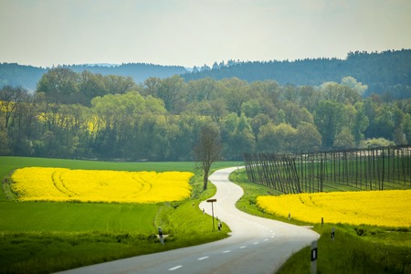 A road passing next to yellow flowering rapeseed fields in spring in Bavaria, Germany. Rapeseed is grown for the production of animal feeds, vegetable oils and biodiesel. Stock Photo