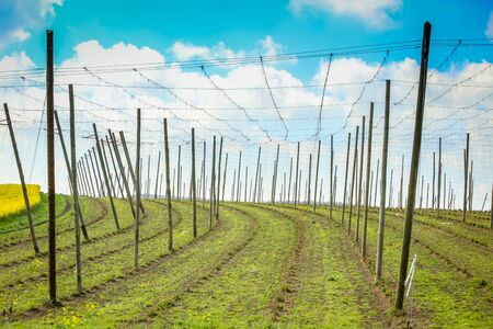 Cultivated hop fields in spring under the cloudy sky in Bavaria, Germany.