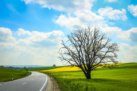 A road passing next to an isolated tree and cultivated rapeseed fields in spring in Bavaria, Germany.