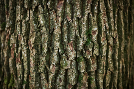 A view of oak tree bark texture.