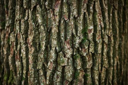 Een weergave van eiken boomschors textuur.