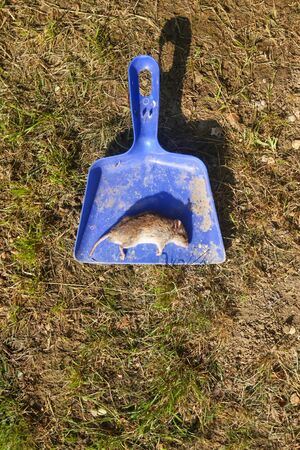 A directly above view of a dead mouse on a spatula lying on the ground.
