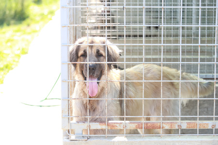 Dog in an animal shelter waiting for someone to adopt them. Stock Photo