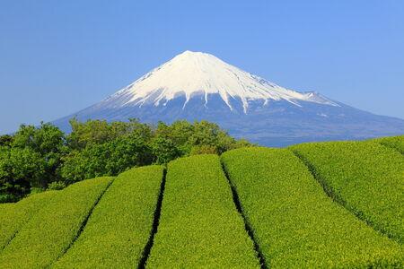 Mt Fuji Beyond the Tea Field photo