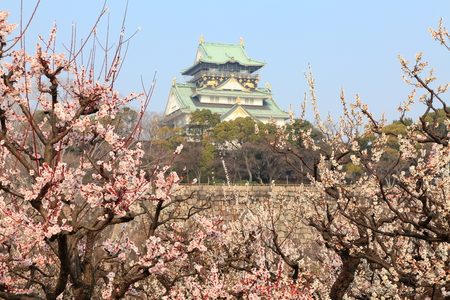 osaka castle: osaka castle and plum blossoms Editorial