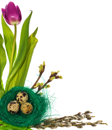 Easter eggs in green bird nest  with flowers tulips, catkins on a white background.