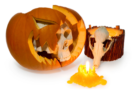 Halloween ghost human skull comes out of a broken pumpkin and animal skull. Skeleton head and scary dead fox head lit with candle. Party decoration illuminates on a white background.