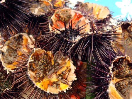 pilluelo: Abrir el erizo de mar listo para ser comido Foto de archivo