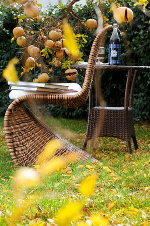 autumn garden view with poemgranate trees  photo