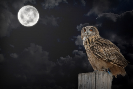 predatory: owl