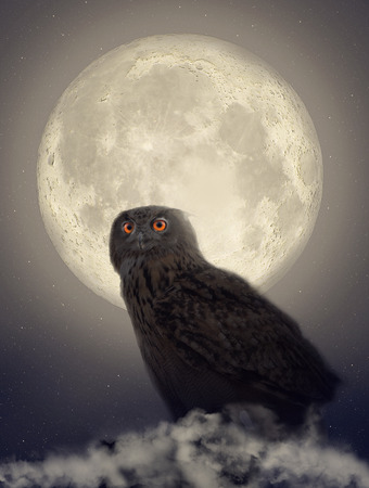 Owl in the moonlight photo