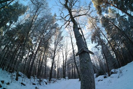 2 5: Fisheye photo of Swedish winter forest with frost and ice on tree branches. With sign choice of path 2,5 km or 5 km.