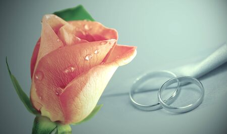 Pink Rose with rings photo