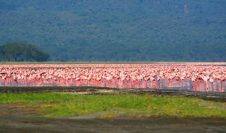 Flocks of flamingo. Africa. Kenya. Lake Nakuru Stock Photo - 5213558