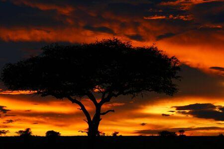 Tree shade and dramatic sunset. Africa. Kenya. Masai Mara. photo