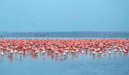 Bandadas de flamencos. �frica. Kenia. Lago Nakuru Foto de archivo - 5277048