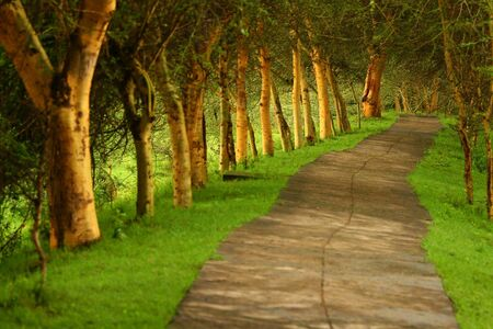 Forest pathway. Africa. Kenya photo
