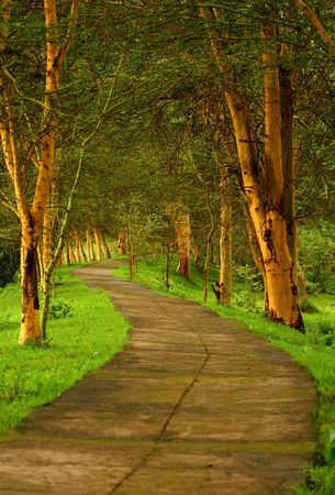 Forest pathway. Africa. Kenya Stock Photo - 6824697