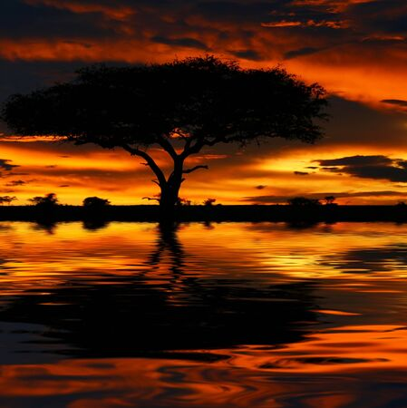 Tree silhouette and dramatic sunset. Africa. Kenya. Masai Mara. photo