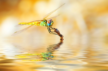 Closeup portrait of a beautiful colorful dragonfly photo