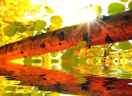 Fresh autumn forest background withn sunlight Stock Photo - 7564562
