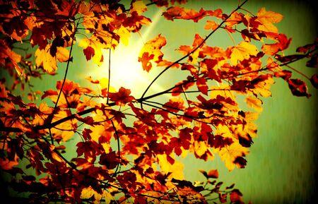 in september: Grunge autumn dark background with sunlight