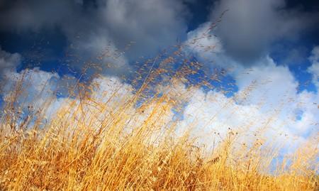 Wheat field landscape late summer scene Stock Photo - 7585604