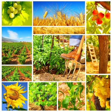 Harvest concept collage with a gardener working on the field photo