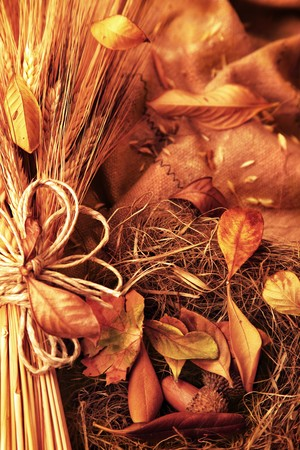 Grunge wheat background with autumn leaves Stock Photo - 7610387