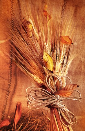 Grunge wheat background with autumn leaves Stock Photo - 7664986