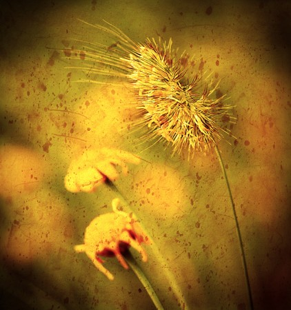 Grunge closeup on wheat  with autumn flowers Stock Photo - 7664985
