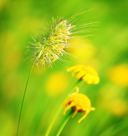Closeup on wheat with autumn dry flowers Stock Photo - 7664991