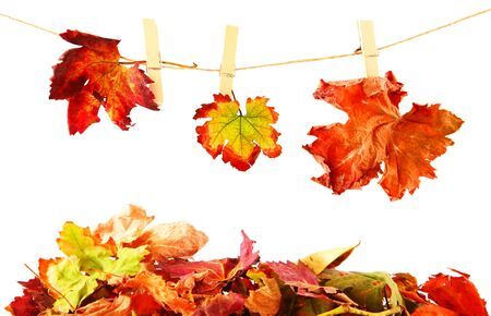 Three different autumn leaves hanged on the clothesline isolated on white photo