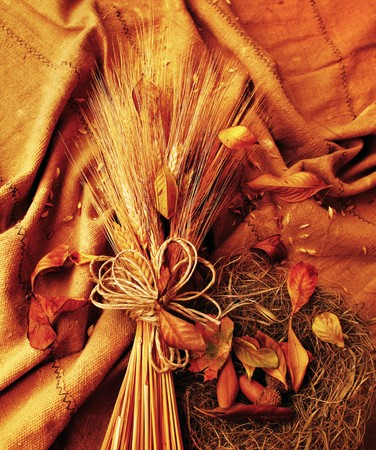 beautiful thanksgiving: Grunge wheat background with autumn leaves Stock Photo