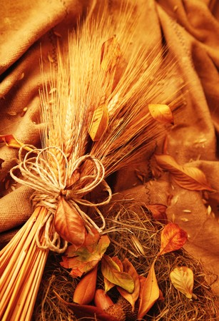 Autumn wheat background with leaves Stock Photo - 7753276